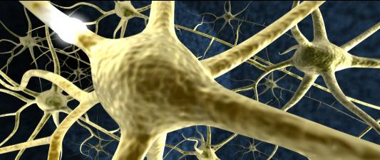nerves image